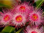 Vẻ đẹp của loài hoa được dùng làm thuốc trị bách bệnh