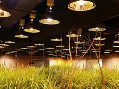 Chủ động sản xuất thiết bị chiếu sáng nông nghiệp công nghệ cao