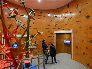 50.000 mẫu vật được lưu giữ tại Bảo tàng Thiên nhiên Việt Nam