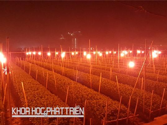 Chế tạo đèn chuyên dụng điều khiển cây ra hoa