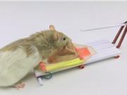 Clip: Cách làm bẫy chuột bằng giấy cực kỳ an toàn và hiệu quả