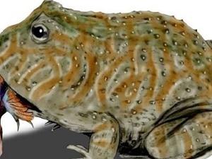 Loài cóc quỷ khổng lồ có thể ngoạm chết khủng long