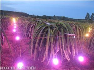 Gắn hàn lâm với  thực tiễn: Đèn chiếu sáng trong nông nghiệp ra thị trường