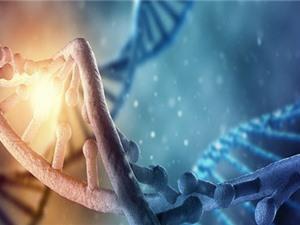 Trải nghiệm thời thơ ấu có thể thay đổi vĩnh viễn DNA