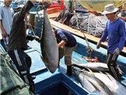 Bình Định hoàn thiện hồ sơ đăng ký nhãn hiệu chứng nhận Cá ngừ đại dương