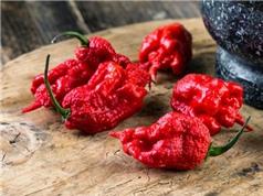 Loại ớt cay nhất thế giới được tạo ra như thế nào?