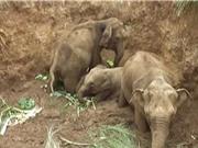 Clip: Giải cứu 4 chú voi bị rơi xuống giếng giữa đồng