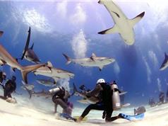 Clip: Rợn người trước cảnh thợ lặn bị 80 con cá mập bao vây