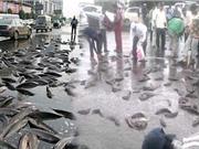 Kì bí hiện tượng cá theo mưa rơi từ trên trời xuống đất