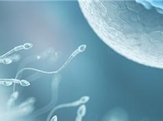 Đàn ông mất hơn một nửa số tinh trùng so với năm 1973