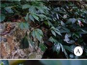 Tìm thấy nhiều loài thực vật mới tại Việt Nam