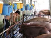 Người tiêu dùng không thể nhận biết thịt lợn bị tiêm thuốc an thần