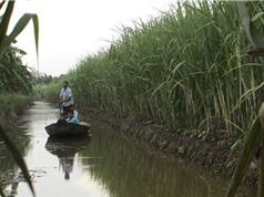 Một số giải pháp chuyển đổi sinh kế cho Đồng bằng sông Cửu Long