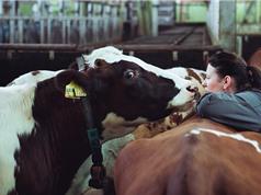 Gia súc tác động cực lớn đến biến đổi khí hậu