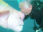 Cá mặt người bầu bạn với ân nhân cứu mạng suốt 25 năm