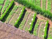 Trồng cây có rễ sâu giúp giảm nguy cơ sạt - trượt