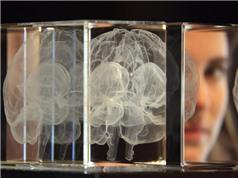 Não người có tổ chức như một cộng đồng