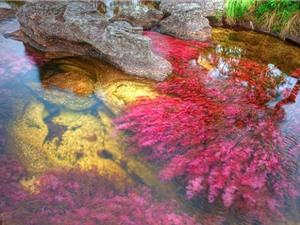Clip: Ngắm dòng sông 7 sắc cầu vồng sặc sỡ nhất thế giới