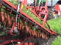 Clip: Máy nhổ cà rốt siêu đẳng tại Na Uy