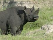 Clip: 10 loài động vật bị tuyệt chủng do con người trong thế kỷ XXI