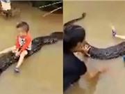 Video bé ba tuổi cưỡi trăn ở Thanh Hóa lên báo ngoại