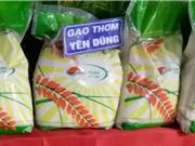Năng suất thấp dìm giá gạo thơm Yên Dũng