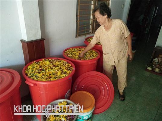 Nước rửa chén, lau nhà dùng xong có thể tưới cây