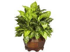 Hướng dẫn trồng cây ngọc ngân trang trí nội thất