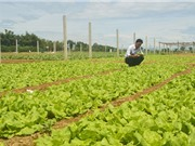 Quảng Ngãi: Quản lý sản xuất và tiêu thụ rau, củ, quả an toàn thực phẩm