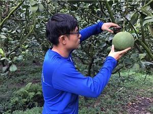 Hậu Giang: Thời tiết thất thường, lo thất mùa trái cây Tết