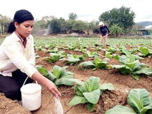 Hàn Quốc sẽ tài trợ Việt Nam 6,5 triệu USD phát triển nông thôn mới