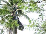 Người đàn ông sống trên cây dừa suốt... 3 năm