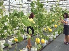 Công ty CP Global Cybersoft - đơn vị ứng dụng IoT trong nông nghiệp