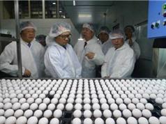 Việt Nam sắp được ăn trứng gà sạch và bổ dưỡng như Nhật Bản