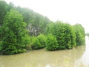 Cà Mau áp dụng công nghệ để bảo vệ rừng phòng hộ