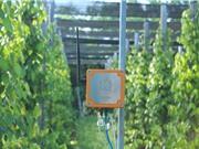 Công ty TNHH Mimosa Technology (MimosaTEK) - đơn vị ứng dụng IoT trong nông nghiệp