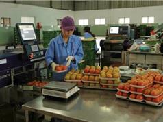 Mở rộng mô hình trung tâm sau thu hoạch tại Lâm Đồng