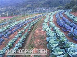 Cao Bằng: Nông dân Phia Đén tiếp cận công nghệ mới trồng rau, hoa