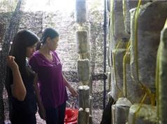Trồng nấm Bào ngư và nấm Linh chi tại thị trấn Hai Riêng, huyện Sông Hinh