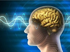 Những thói quen xấu làm tổn thương trí não