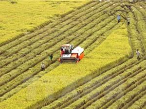 Thị trường nông sản Việt Nam diễn biến trái chiều