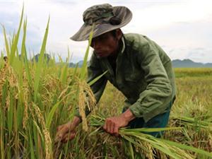 Thay đổi tập quán, sản xuất lúa hữu cơ để nuôi giấc mơ làm giàu