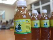 Công nghệ sản xuất đồ uống chức năng từ cây diếp cá