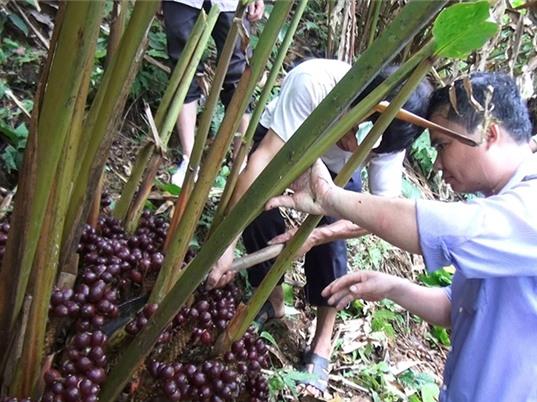 Hà Giang: Tiếp cận công nghệ chăn nuôi, phát triển kinh tế rừng
