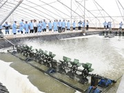 Thêm hai chương trình tăng tốc khởi nghiệp nông nghiệp