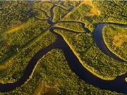 Khởi động dự án trồng rừng lớn nhất thế giới