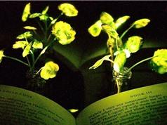 Tìm ra công nghệ giúp cây phát sáng thay đèn đường