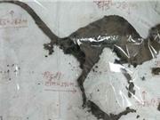 Phát hiện sinh vật bí ẩn giống loài khủng long ăn thịt tại Ấn Độ