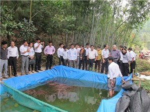 An Giang: Ứng dụng nuôi lươn không bùn và nuôi cá lóc trên bể lót bạt