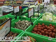 Logistics trong nông nghiệp: Chuỗi cung ứng lạnh